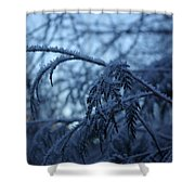 Cedars Of Ice Shower Curtain