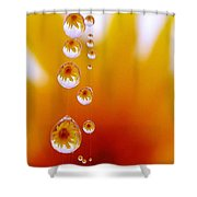 Celebrate Shower Curtain