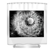 Celebration Of Nature In Black And White Shower Curtain
