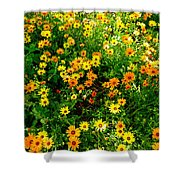 Celebration Of Yellows And Oranges Study 4 Shower Curtain