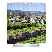 Celery Harvest Shower Curtain