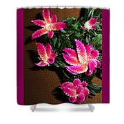 Celosia 7 Shower Curtain