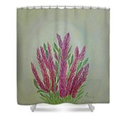 Celosia Dragon's Breath Acrylic Painting By Artist Rosie Foshee Shower Curtain