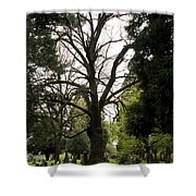 Cemetery Trees 2 Shower Curtain
