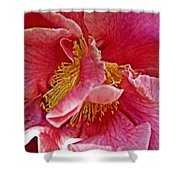 Center Of A Pink Camellia At Pilgrim Place In Claremont-california  Shower Curtain