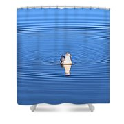 Center Of Attention  3247 Shower Curtain