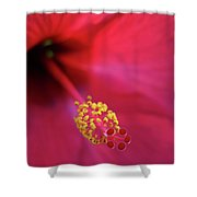 Center Of Attention - Hibiscus 01 Shower Curtain