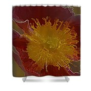 Center Of Yellow Shower Curtain