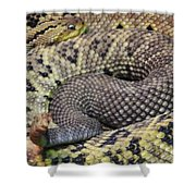 Central American Rattlesnakee Shower Curtain