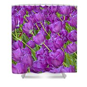 Central Park Spring-purple Tulips Shower Curtain
