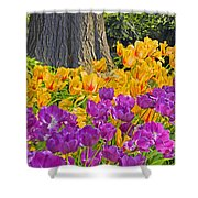 Central Park Tulip Display Shower Curtain