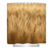 Cereal Field Shower Curtain