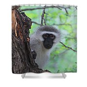 Chacma Baboon Shower Curtain