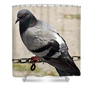 Chain Of Coos Shower Curtain