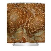 Challah Bread Shower Curtain