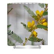Chamaecrista Fasciculata Sleeping Plant Partridge Pea Shower Curtain