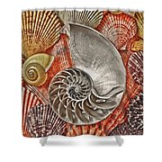 Chambered Nautilus Shell Abstract Shower Curtain by Garry Gay