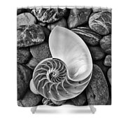 Chambered Nautilus Shell  On River Stones Shower Curtain