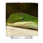 Chameleon 2 Shower Curtain