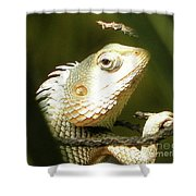 Chameleon Up-close 1 Shower Curtain