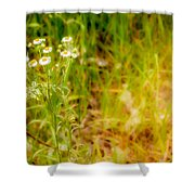Chamomile In The Sunny Meadow Shower Curtain
