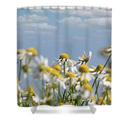 Chamomile Nature Spring Scene Shower Curtain