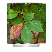 Change Is Coming Shower Curtain