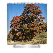 Changing Maple Colors Shower Curtain