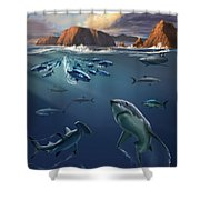 Channel Islands Sharks Shower Curtain