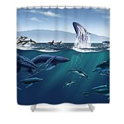 Channel Islands Whales Shower Curtain