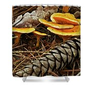 Chanterell Mushrooms  Shower Curtain