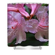 Chapmans Rhododendron Shower Curtain