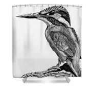 Charcoal Kingfisher Shower Curtain