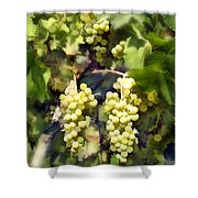 Chardonnay Shower Curtain