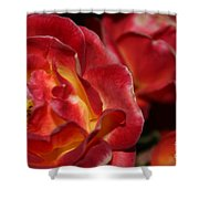 Charisma Roses 2 Shower Curtain