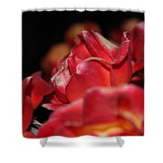 Charisma Roses 3 Shower Curtain