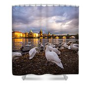 Charles Bridge, Prague With Swans Shower Curtain