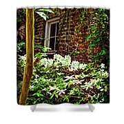 Charleston Alley Window Shower Curtain