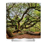 Charleston Sc Angel Oak Tree South Carolina Landscape Shower Curtain