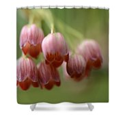 Charming Bells Shower Curtain