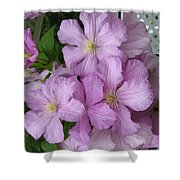 Charming Clematis Shower Curtain