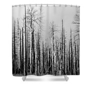 Charred Trees Shower Curtain