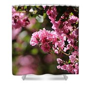 Chateau Rose Pink Flowering Crepe Myrtle  Shower Curtain