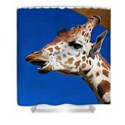 Chatty Kathy Shower Curtain