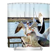 Chatty Seagull Birds Shower Curtain