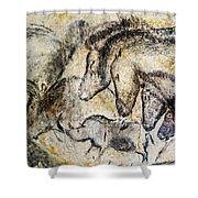 Chauvet Horses Aurochs And Rhinoceros Shower Curtain