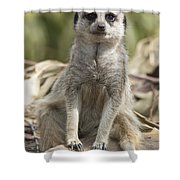 Check Front Shower Curtain