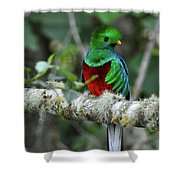 Check Me Out Shower Curtain