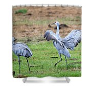 Check The Moves Shower Curtain