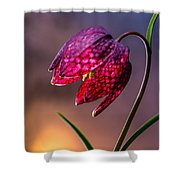 Checkered Lily Shower Curtain